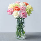 Image of 12 Classic Carnations