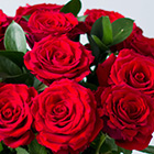 Image of 12 Red Roses