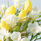 Image of Freesias and Tulips