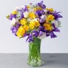 Iris and Freesias Large
