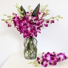 Image of Oriental Orchids