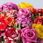 Image of Sweet Summer Roses