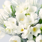 Image of Winter Tulips & Freesias