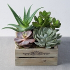 Image of Mixed Succulents in Crate