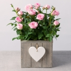 Pink Rose Plant in Heart Crate