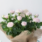 Image of Rose Plant in Watering Can