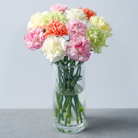 Image of 12 Carnations with Gypsophila