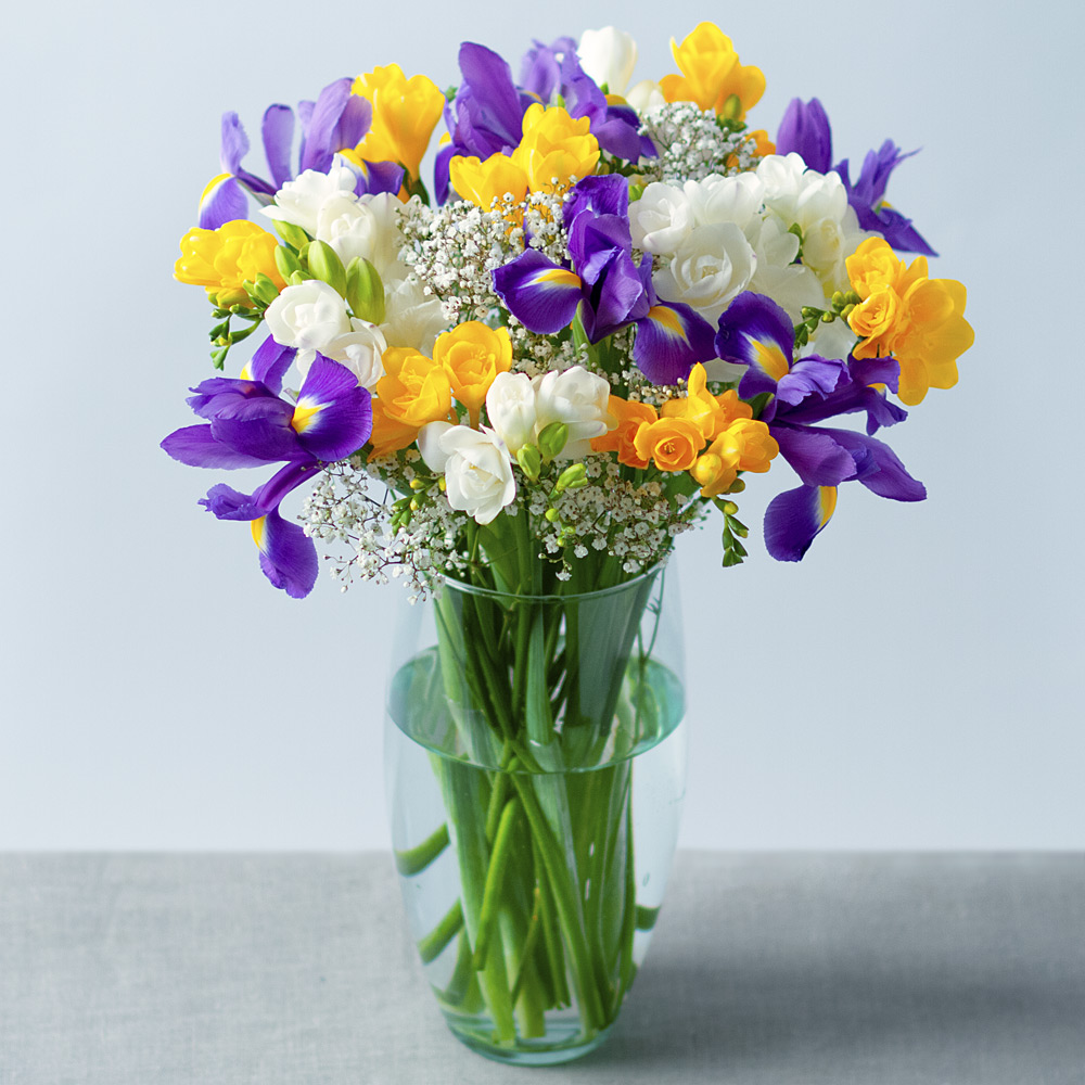 Image of This fragrant and colourful arrangement of spring blooms features blue Iris joined by white and yellow Freesia.Delicate white Gypsophila provides the perfect finishing touch, making it a fantastic gift to send to a loved one.