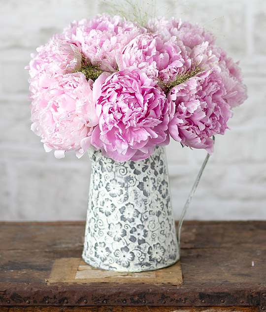 Photograph of Pink Peonies
