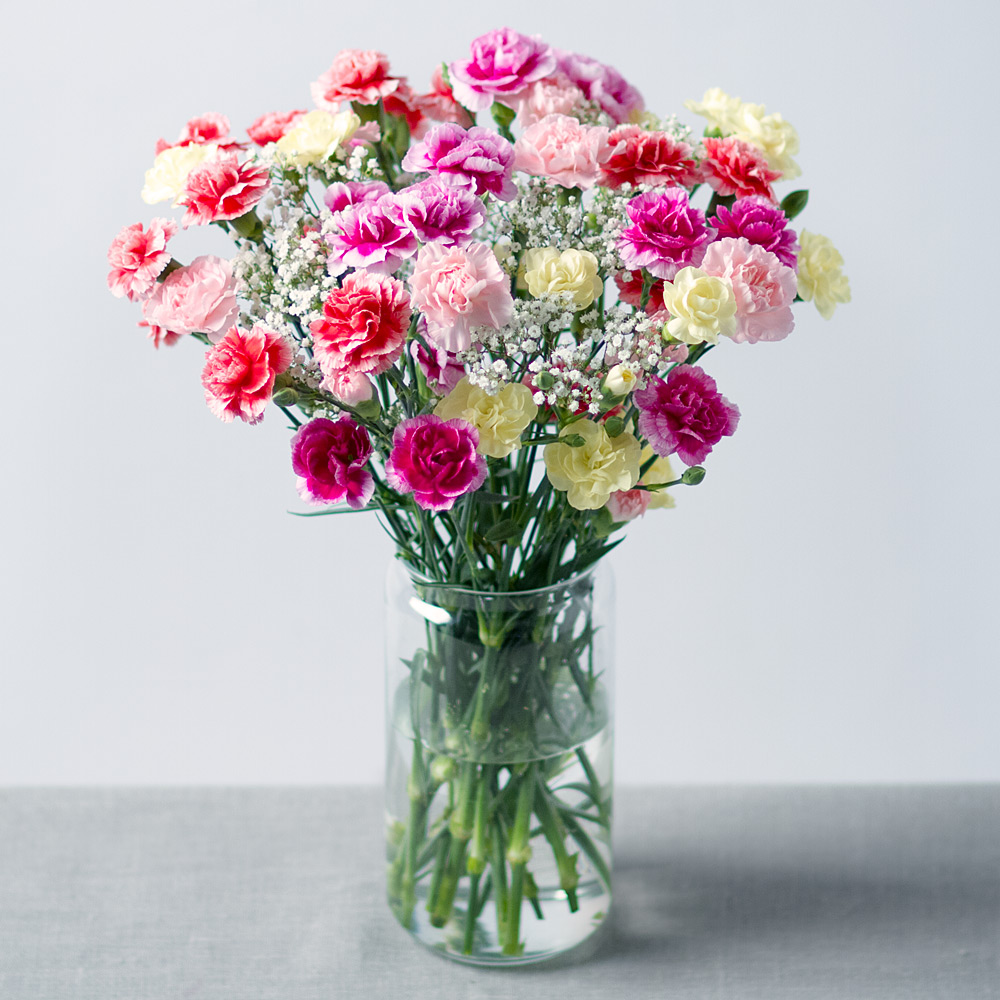 Image of A pretty bouquet of 14 delicate spray Carnations in colourful shades alongside delicate white Gypsophila.Each Carnation stem has at least 4 blooms so 14 stems will give around 56 flowering heads!