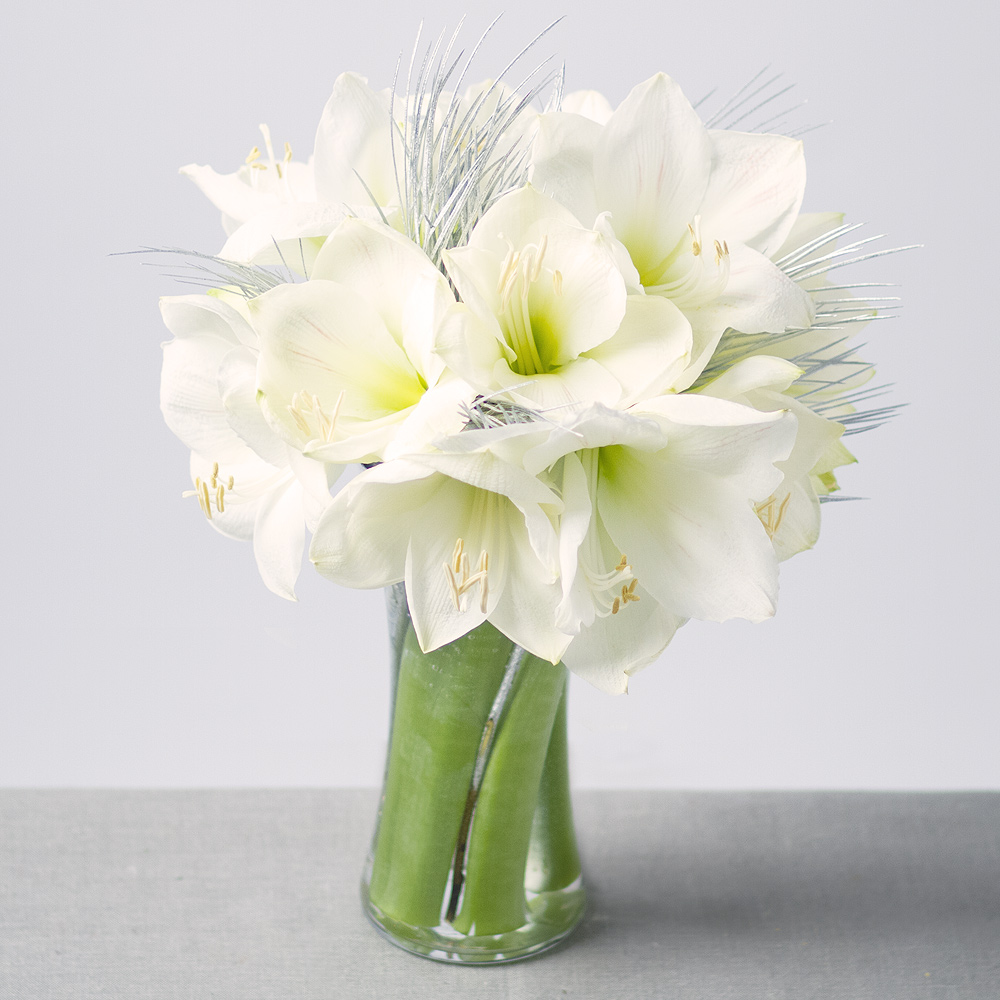 Image of Pure white Amaryllis flowers complemented with festive Silver Grevilla leaves.This white Christmas flower arrangement includes three Amaryllis stems, with each having at least three large white flowering Amaryllis heads which dramatically open when placed in water.